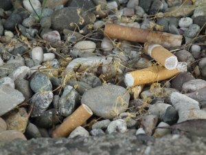 Mégots de cigarette